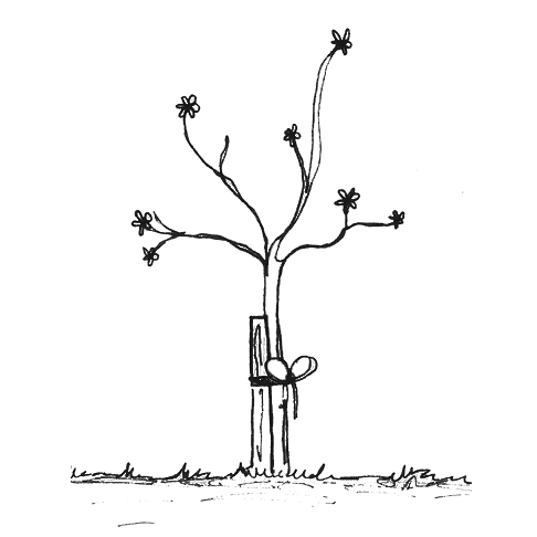 1- Tree